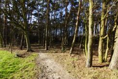Bosweg 1 Putte