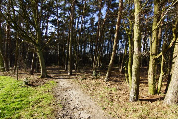 Bosgrond B2288 Te Koop Putte