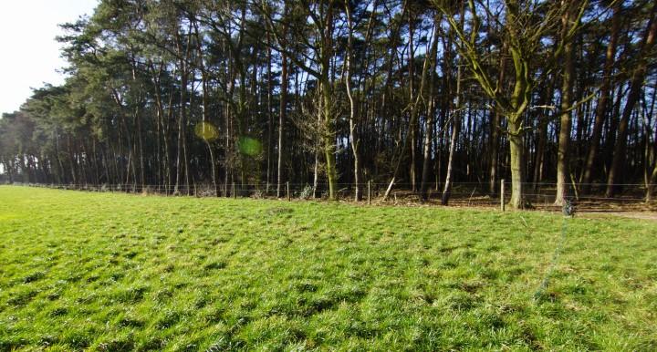 Bosgrond Putte