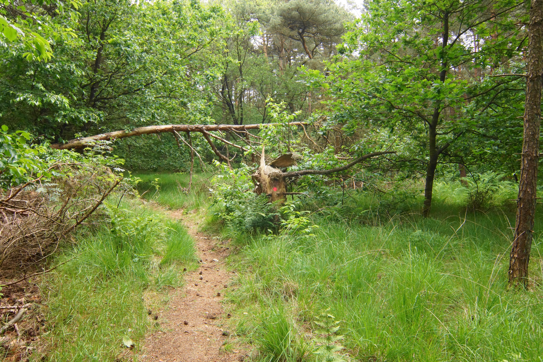 Bosperceel A656 Te Koop Putte