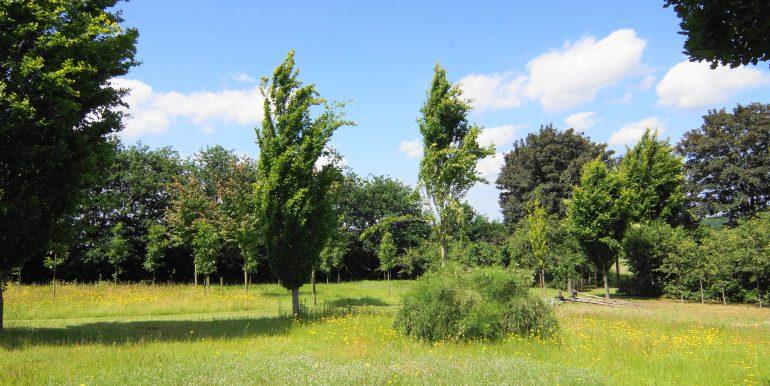 DSC05352 (1)Landbouwgrond