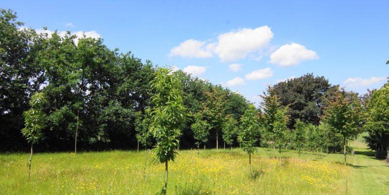 DSC05354 (1)Landbouwgrond
